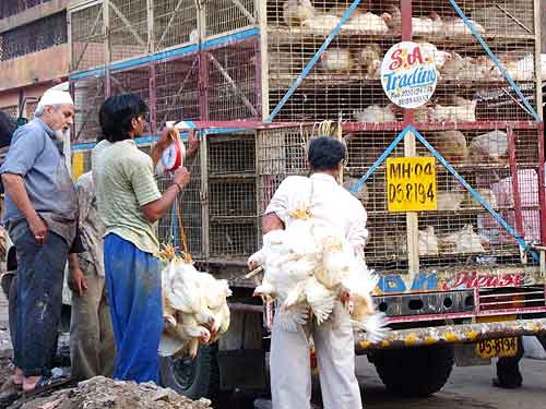 A live chicken seller in Colaba, Mumbai