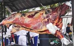 A bull roasting.