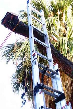 A ladder tied to a ladder.