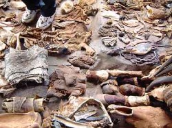 Medicinal plant and animal parts, plus human feet. Be glad this photo isn't larger!