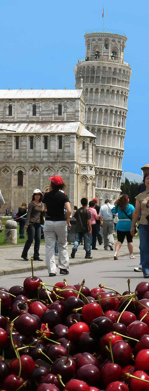 Pickpockets in Pisa, on the way to the Leaning Tower of Pisa. On a beautiful summer day, as seen from behind a cherry vendor.