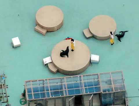 Rooftop seal training as seen from 60 floors up.