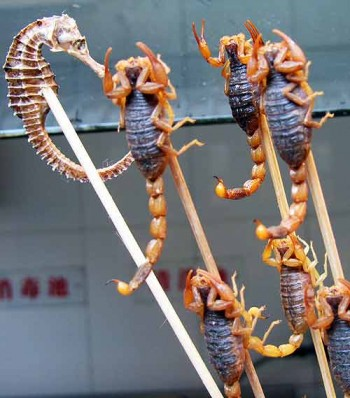 Beijing street food: Scorpion snack